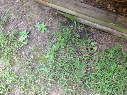 Backyard grass issues NEED HELP-image-2551834836.jpg