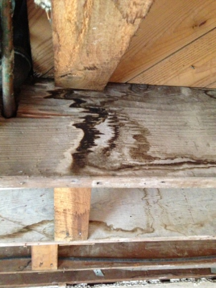 Water stained floor joists-image-2612455867.jpg