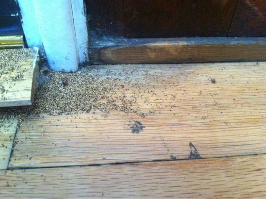 Do I have termites? What should we do?-image-2671144056.jpg