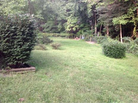 Backyard grass issues NEED HELP-image-2737435809.jpg