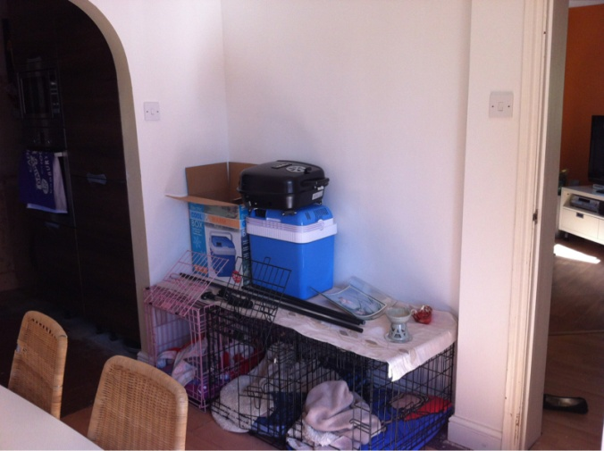 Understair cupboard-image-2815082698.jpg