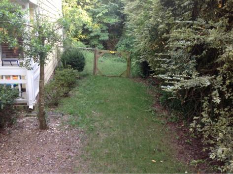 Grass questions-image-2902813910.jpg