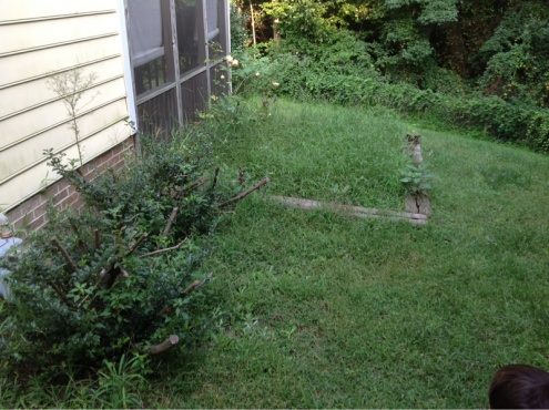 Backyard grass issues NEED HELP-image-2920964034.jpg