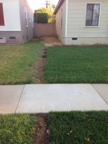 My grass vs neighbors grass-image-2960132841.jpg