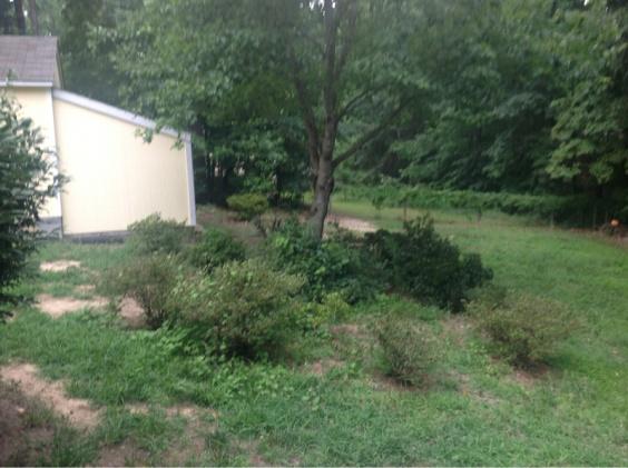 Backyard grass issues NEED HELP-image-3206349148.jpg