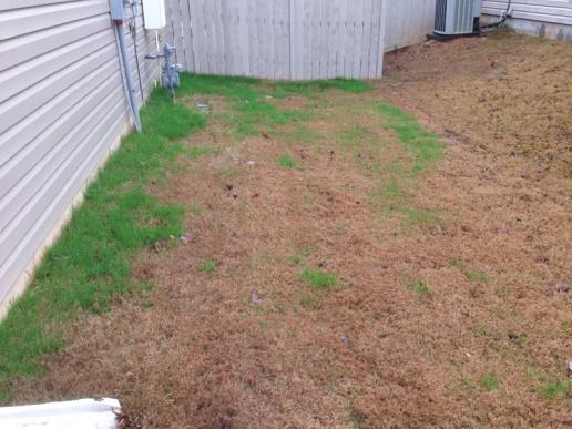 Help identifying grass invasion-image-3223166830.jpg