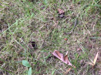 Grass questions-image-3225197121.jpg
