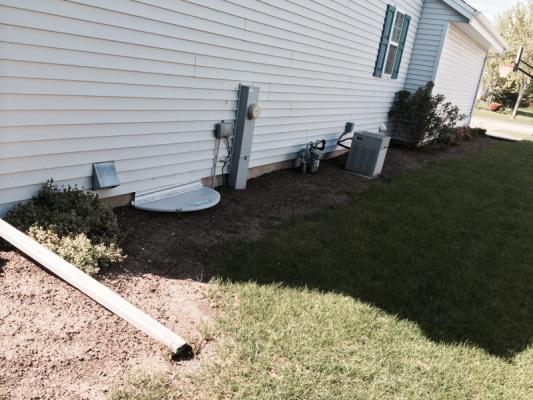 Replace shrubs or wait?-image-3288062630.jpg