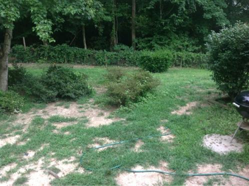 Backyard grass issues NEED HELP-image-3331119201.jpg