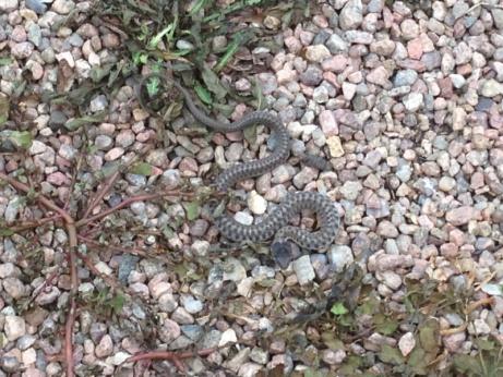 Snake???-image-34880075.jpg