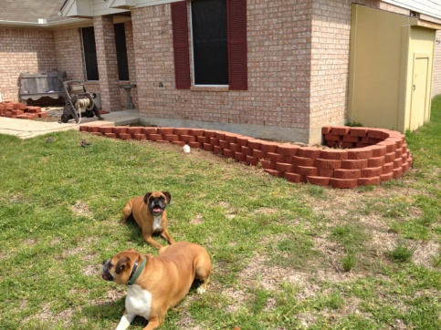 New landscaping need plant ideas..-image-3617231276.jpg