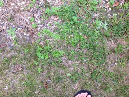 Grass questions-image-3700370714.jpg