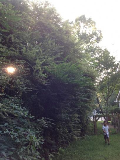Backyard grass issues NEED HELP-image-3978863395.jpg