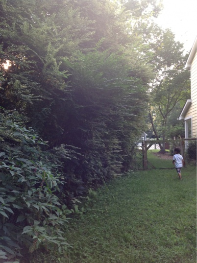 Backyard grass issues NEED HELP-image-3990972123.jpg
