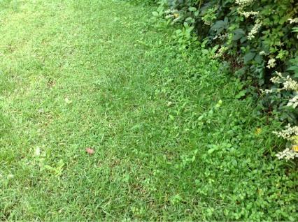 Backyard grass issues NEED HELP-image-4043379428.jpg