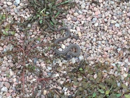 Snake???-image-4065790877.jpg