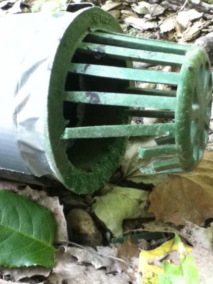 Drain pipe vermin-image-4162398673.jpg