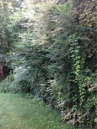 Backyard grass issues NEED HELP-image-4185091732.jpg