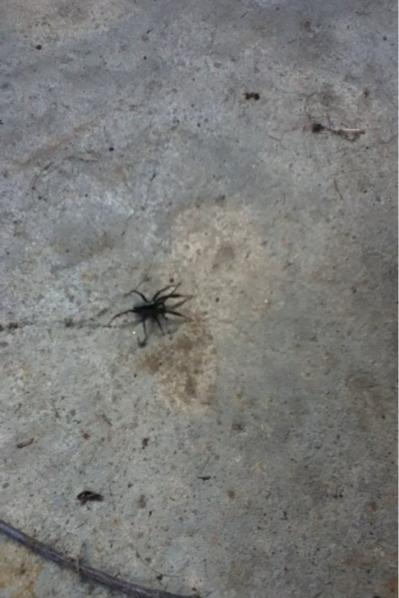 What kind of spider is this-image-4209745177.jpg