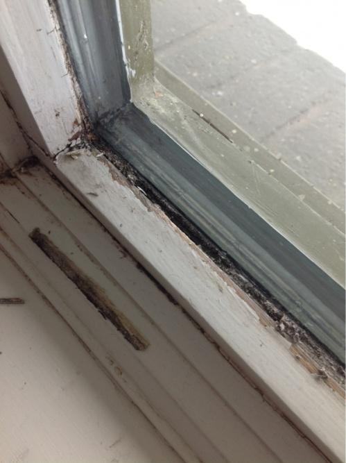 Wood window repair /caulk-image-4213539864.jpg