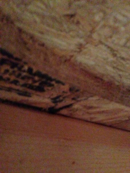 Bouncy Floor-image-4235278232.jpg