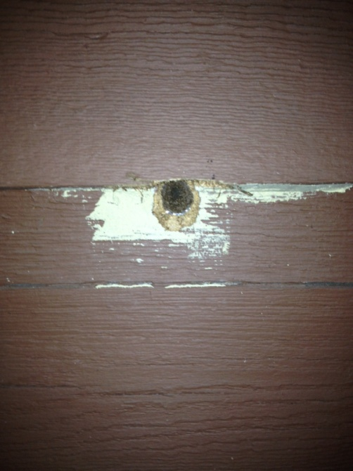 Something eating holes in cedar siding-image-467471248.jpg