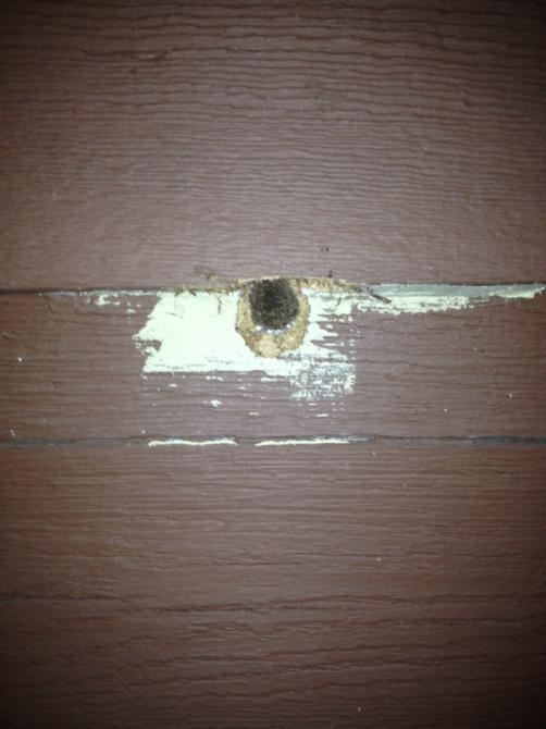 Something Eating Holes In Cedar Siding Pest Control