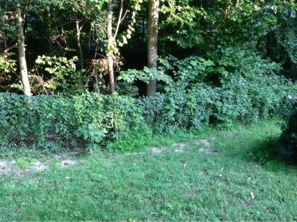 Backyard grass issues NEED HELP-image-496219192.jpg