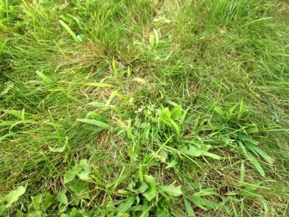 De-thatching lawn-image-500830437.jpg