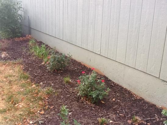 Vertical Cracks in Foundation Near garage-image-584429104.jpg