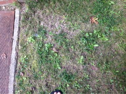 Grass questions-image-674550270.jpg