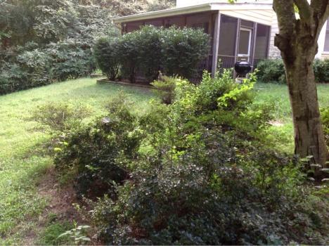 Backyard grass issues NEED HELP-image-680565243.jpg