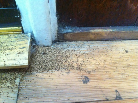 Do I have termites? What should we do?-image-760502646.jpg