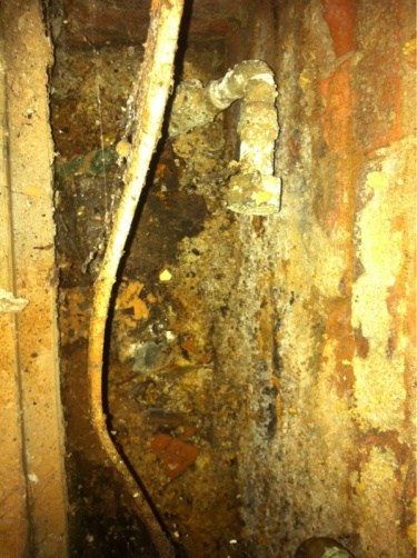 Is this mold?-image-772892304.jpg