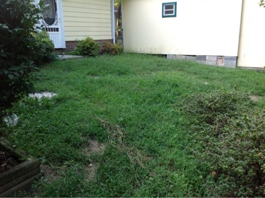 Backyard grass issues NEED HELP-image-791288309.jpg
