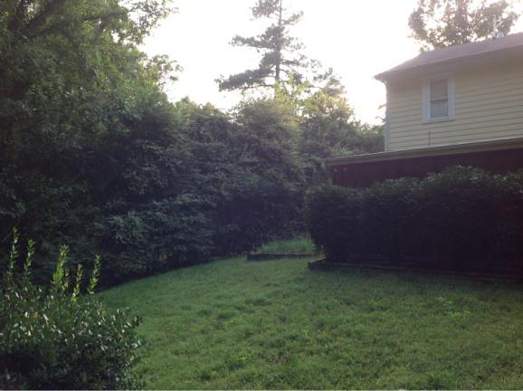 Backyard grass issues NEED HELP-image-80360939.jpg
