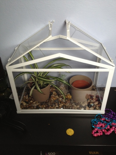 Cat proof cage for house plants.-image-91529477.jpg