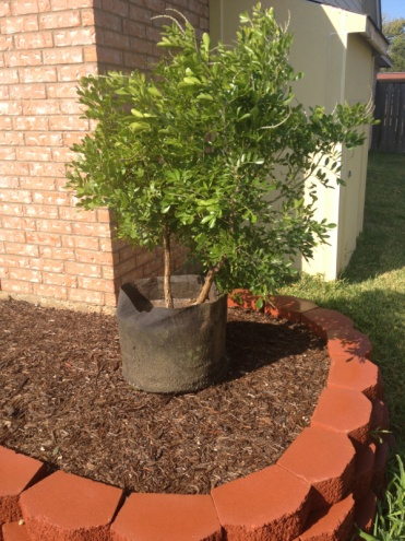 New landscaping need plant ideas..-image-939043412.jpg