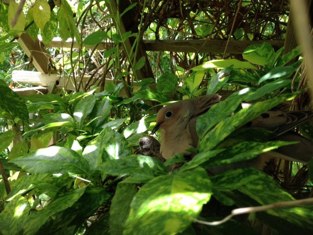 Garden Birds-image.jpeg
