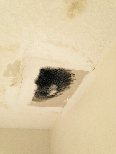 Is mold easy to get rid of?-image.jpg