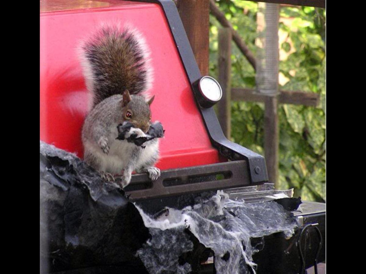 Squirrels!-image.jpg