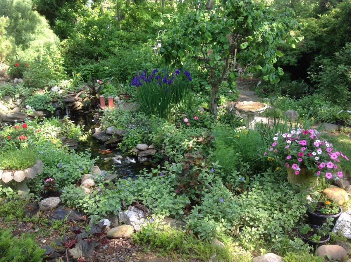our garden flowers-image.jpg