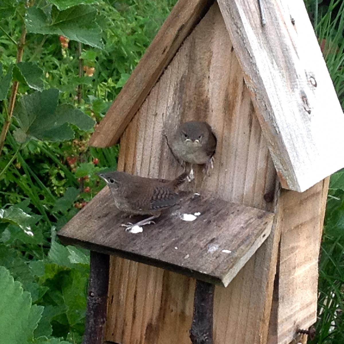 Garden Birds-image.jpg