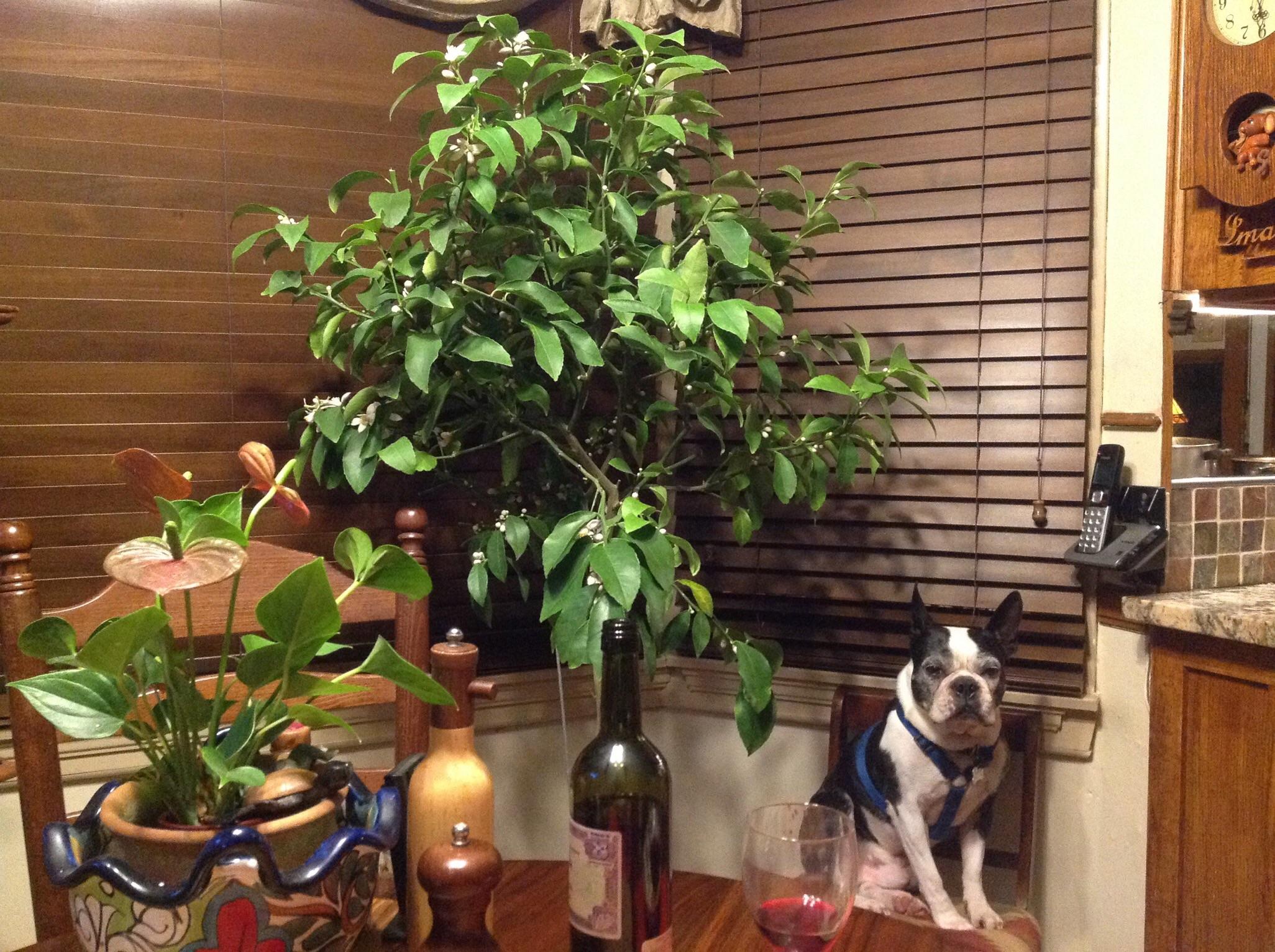 Lemon Tree update-image.jpg