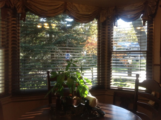 Window Blinds For Double Hung Windows 2 Quot Interior