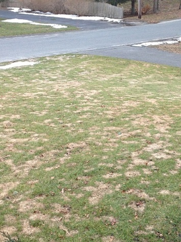 OMG! What's happening to my lawn?-image.jpg