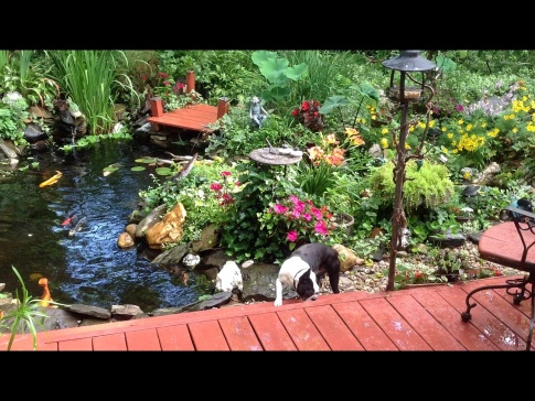 pond & backyard retreat.-image.jpg