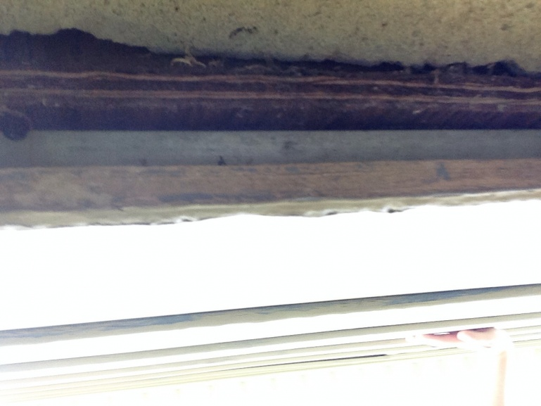 Siding coming away from bottom of house, moisture, mold, how to fix???-image.jpg