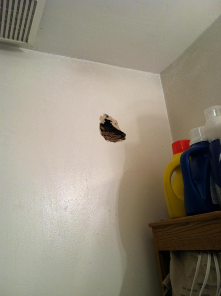 Bees Nest In Wall Drywall Amp Plaster Diy Chatroom Home