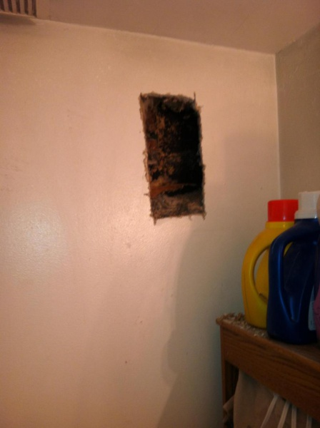 Bees nest in wall?-image_1476401533404.jpg